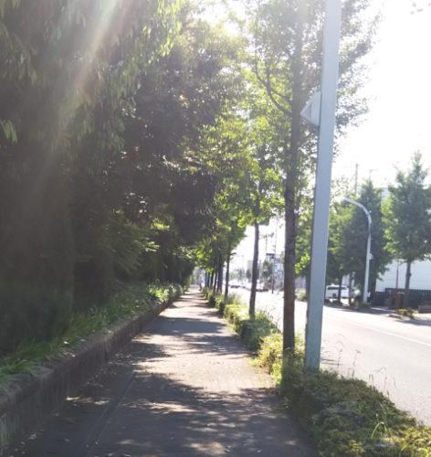 メモリアルセンター脇道